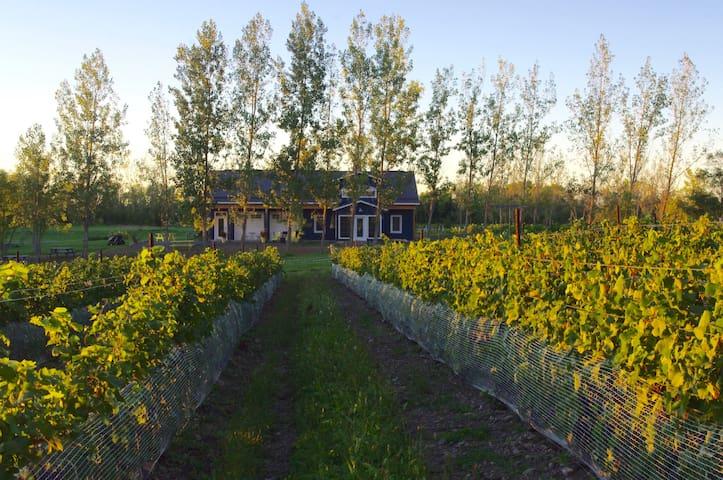 A Vineyard Cottage at Broken Stone Winery - Hillier - Houten huisje
