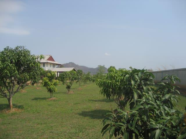 Mountain view fruit farm. - Pak Chong - Rumah