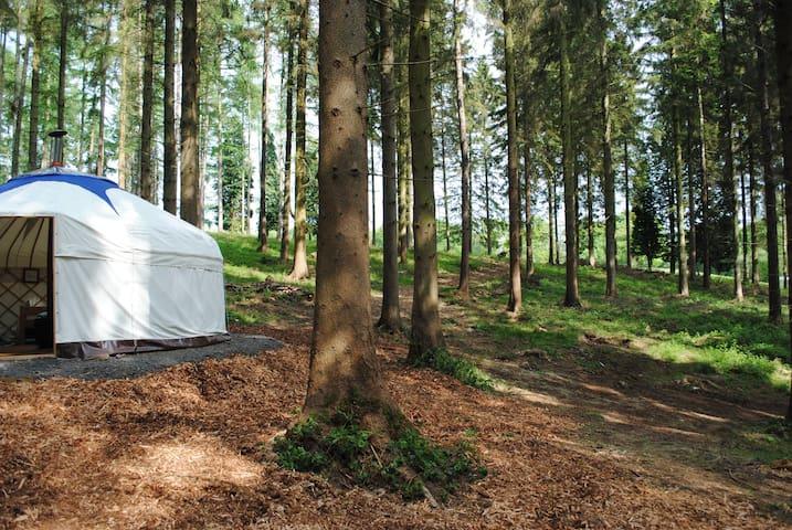 Woodland Yurt - Silligrove Farm - Far Forest - Yurt