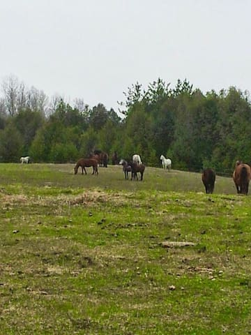 Accomodation on horse farm in house  Smoking  home - Kawartha Lakes - Studentrum