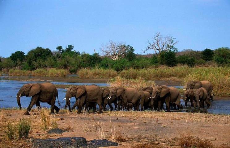 Elephant River Lodge - Marloth Park