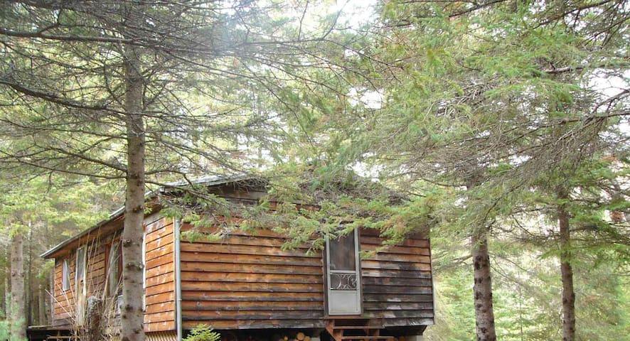 Algonquin cabin for rent all year round - Emsdale - Casa de huéspedes