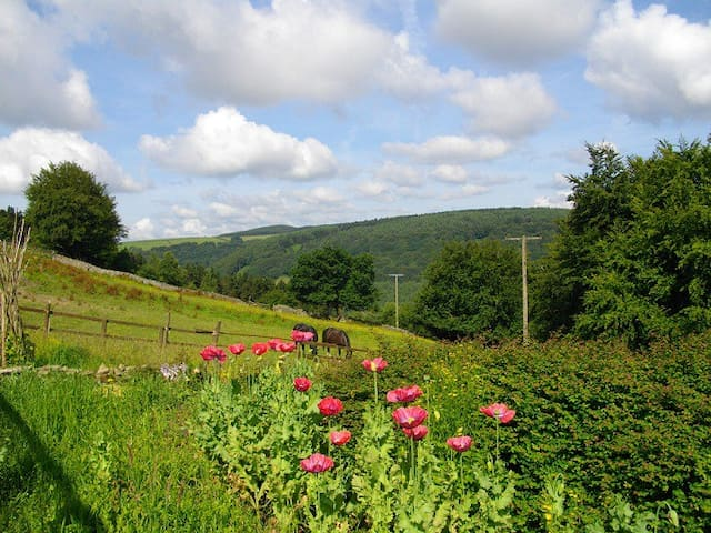 Ty Shon Jacob Farm - Torfaen - Bed & Breakfast