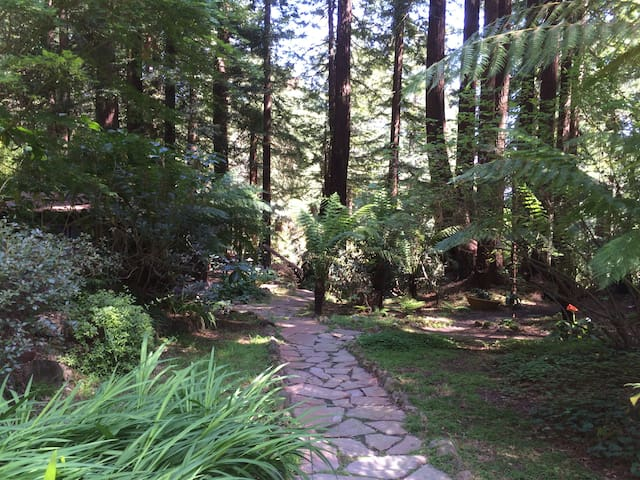 Rustic cottage in Sonoma redwoods - 西方(Occidental) - 小木屋