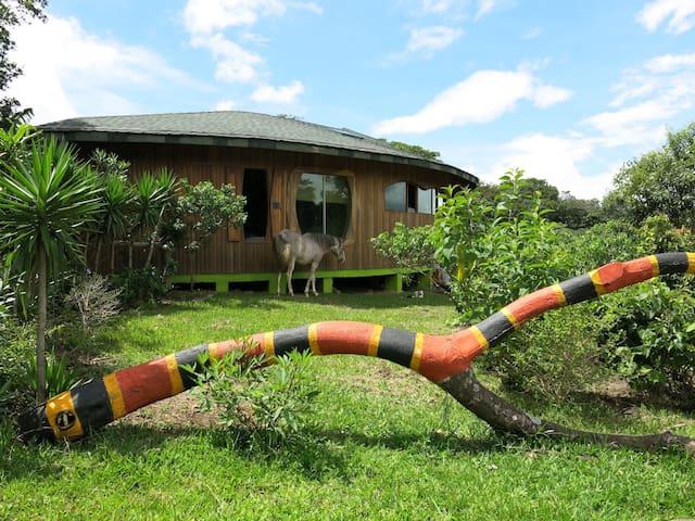 Artistic woodhouse in the mountain1 - Miramar de Puntarenas - Huis