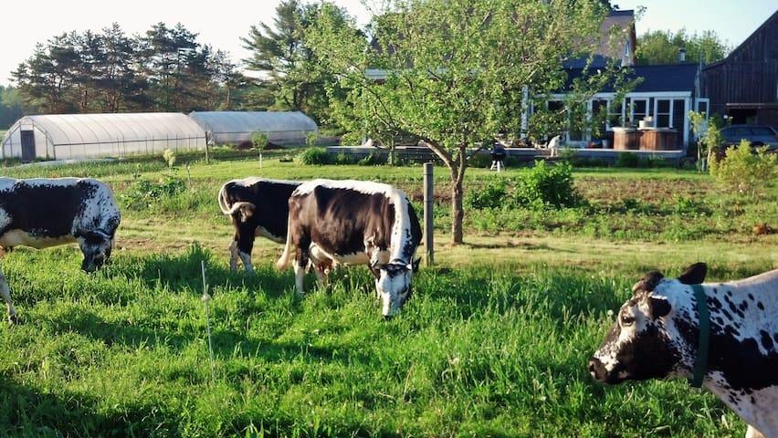 Sunny, family friendly apartment on a working farm - Freeport