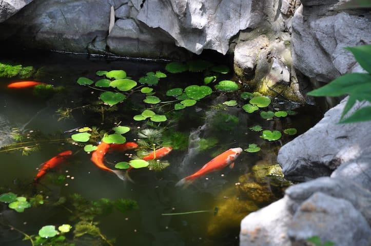 与拙政园、苏州博物馆比邻而居——体会江南人家小院生活 - Suzhou Shi - Apartmen