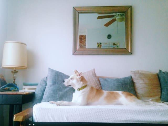 Urban Loft Pet Friendly Escape - Charleston - Lägenhet
