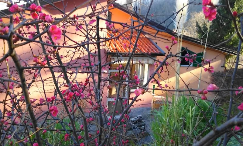 casa vacanze la Castagnara - Rotonda - 獨棟