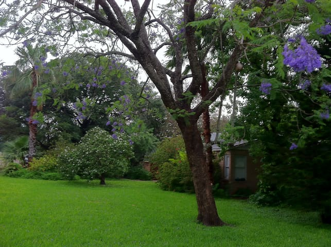 Charming Home with Tropical yard - Alamo - Casa