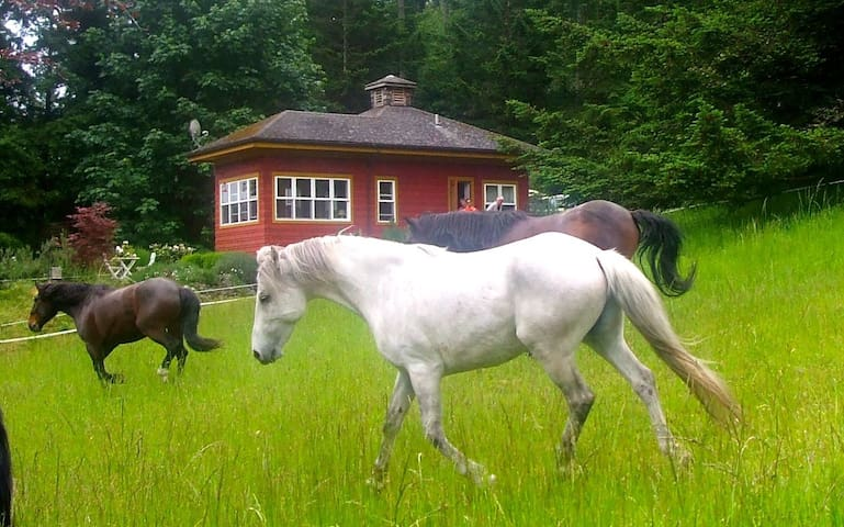 The Rose Cottage - Talking Horse Farm on Orcas - Eastsound - Stuga