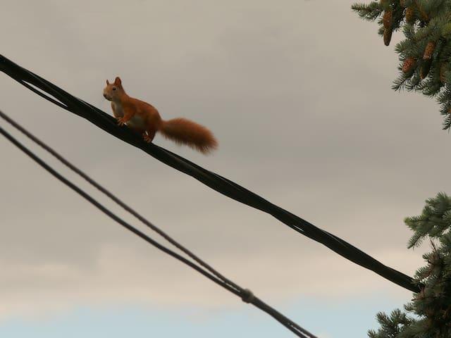 Mad Squirrel Guesthouse - Nagymaros - Domek gościnny