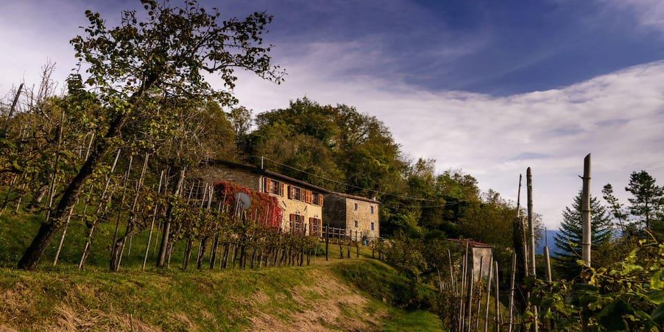A Lovely Villa set in Vineyard, sleeps 8 + 3 - Bigliolo