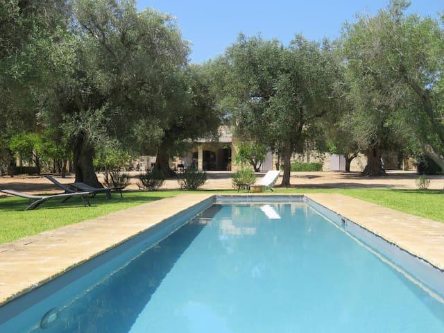 Villa in old olive grove with pool - Miggiano - Villa