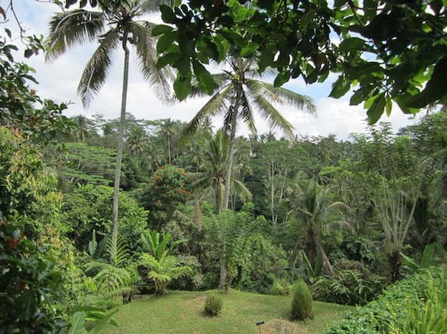 organic jungle villa near ubud - Tegallalang