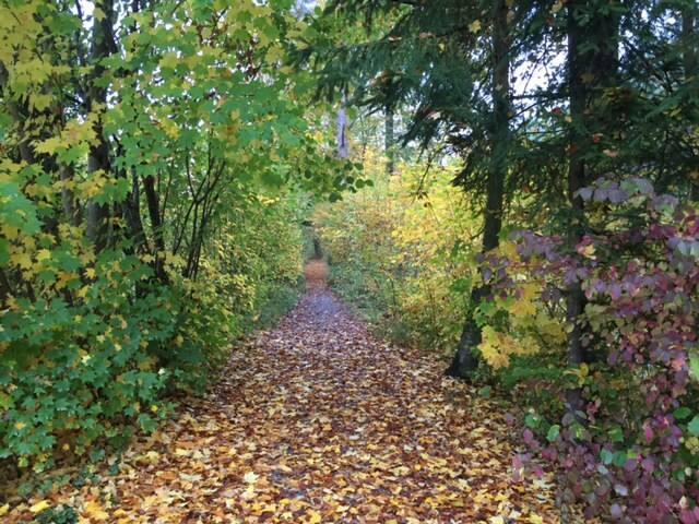 Private room in hikers, runners, bikers paradise - Adliswil - Apartemen