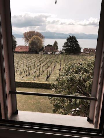STUDIO avec vue sur le lac et les vignes - Buchillon - Appartement