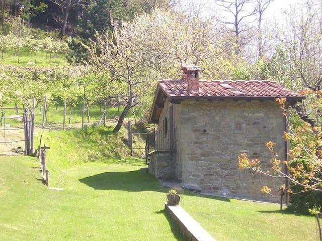 In Toscana tra boschi, cervi e lupi - Bibbiena - Casa
