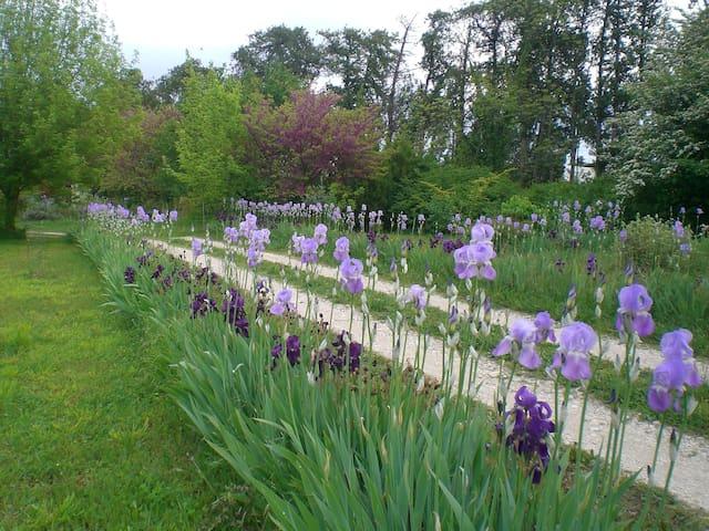 Near Avignon/Mont Ventoux, garden floor with pool - Monteux - Talo