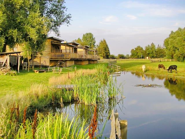 Horse Lake Ranch - Saal - Kulübe