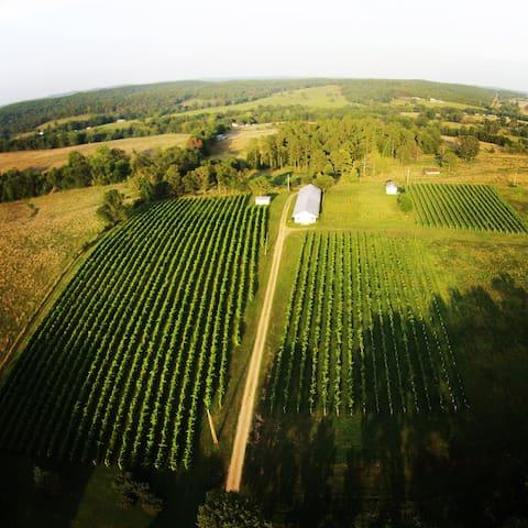 Edg-Clif Winery's Vineyard Cottage - Potosi - Cabane