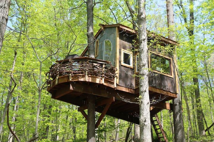 Trillium Treehouse - Linden - Ağaç Ev