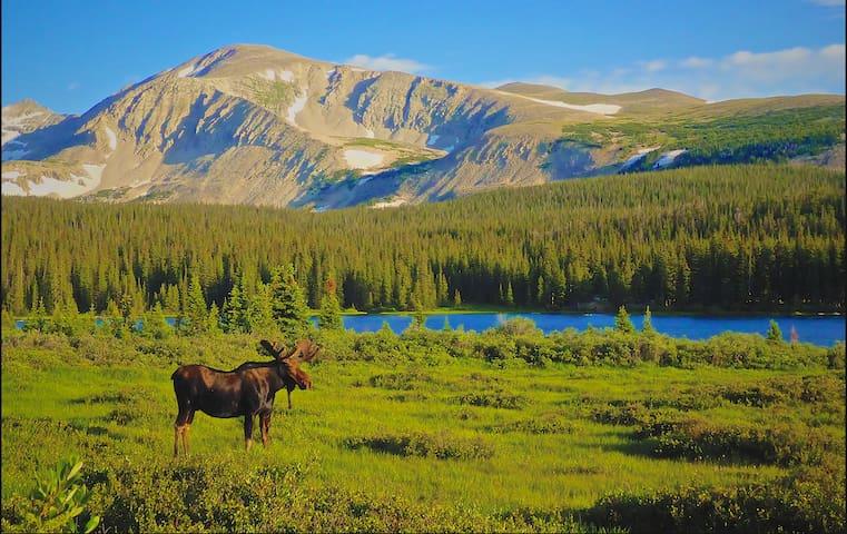 Moose Meadow - Homer