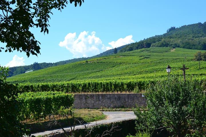 Au Coeur des Remparts & du Vignoble Alsacien - Dambach-la-Ville - Appartement