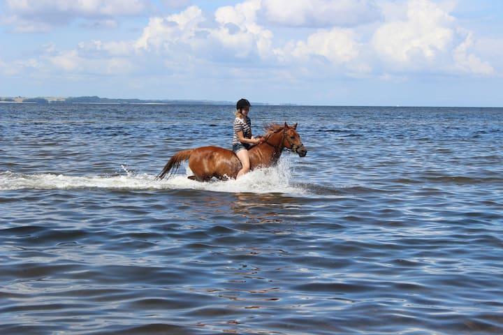 Tag din hest med på ferie, tæt på badestrand - Hvalpsund - Apartamento