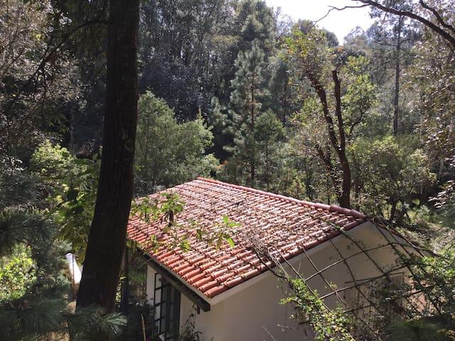 Cottage in Pristine Woods-WiFi - Huasca de Ocampo - キャビン