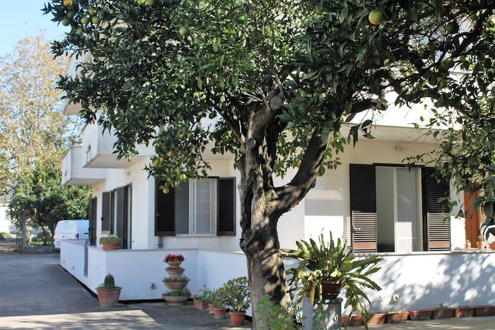 Casa Marina - Minturno - Διαμέρισμα