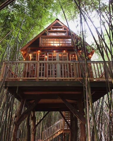 Atlanta Alpaca Treehouse in the Bamboo Forest - Atlanta - Rumah atas pokok