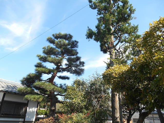 森のハイジ in 松本 part 2      (part  1  もあります) - Matsumoto-shi - Daire