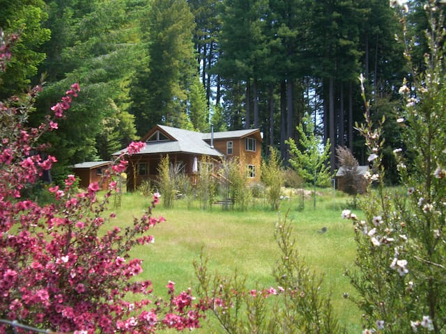 Meadow Wood near Mendocino Village - Albion