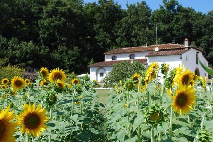 "Vacation home in Tuscany 2 "" Paduletta"" - Quattro Strade - Leilighet"