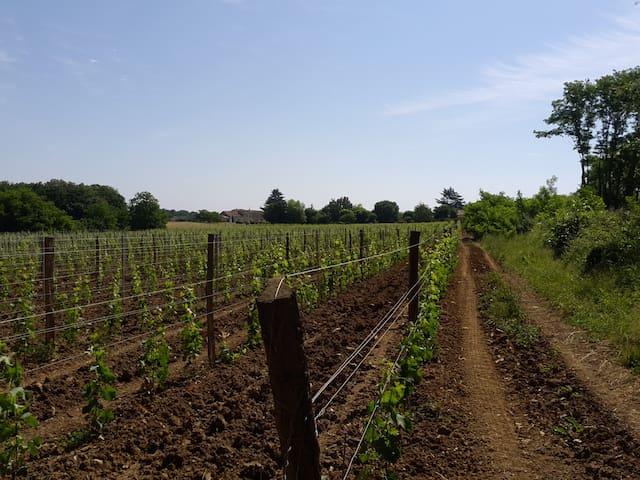 Countryside comfort near St Emilion - Montcaret - Bed & Breakfast