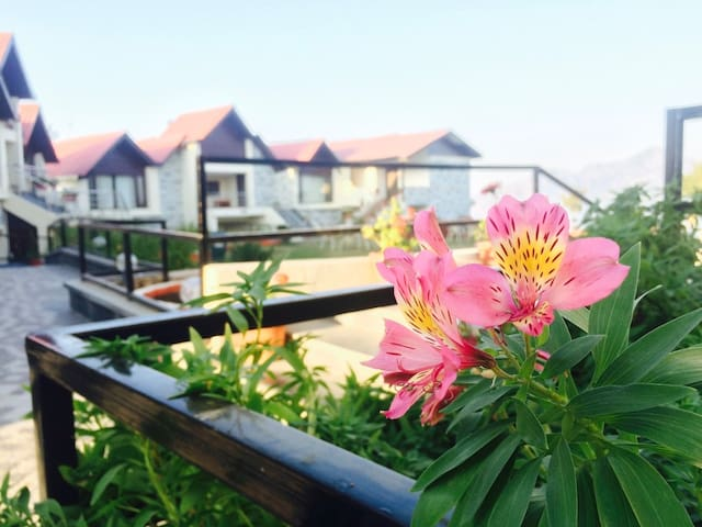Cozy Stay Cottages With Mesmerizing View - 西姆拉(Shimla)
