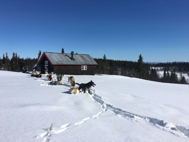 Idyllic cabin in the mountains 940m - Svatsum - Cabaña