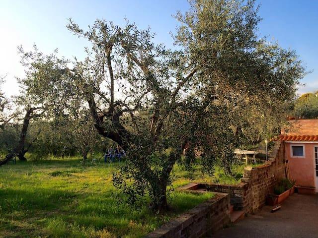 Relax nella campagna romana - Lanuvio - Appartamento