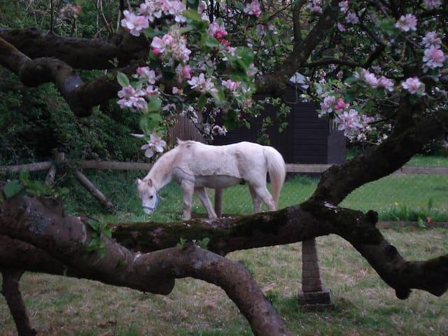 New Forest Traveller's Rest - Lymington - Daire