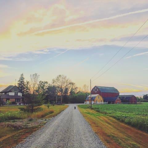 Pine Creek Acres Country Retreat - Pelham - Maison