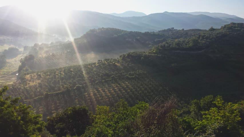 Residenza Francigena - Montelibretti - Dům