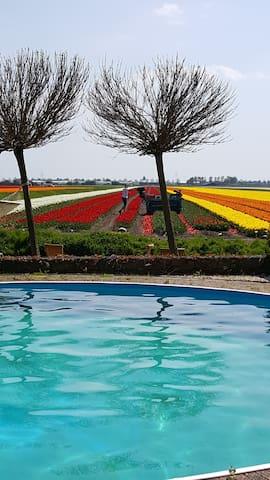 Bed & Breakfast Rosamunde met zwembad en uitzicht - Wervershoof - Lägenhet