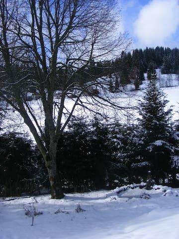Haus Tannengarten - Eisenbach (Hochschwarzwald) - Selveierleilighet