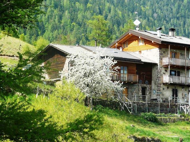 Accogliente casetta in montagna in maso tipico - Sant'Orsola Terme - Maison