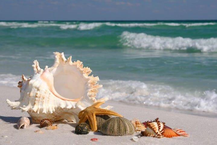 Beach Life - St Augustine  - Casa