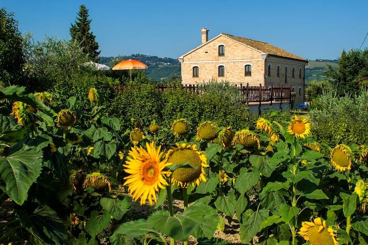 Piagge Del Sole: natura e relax - Montecarotto - Hus