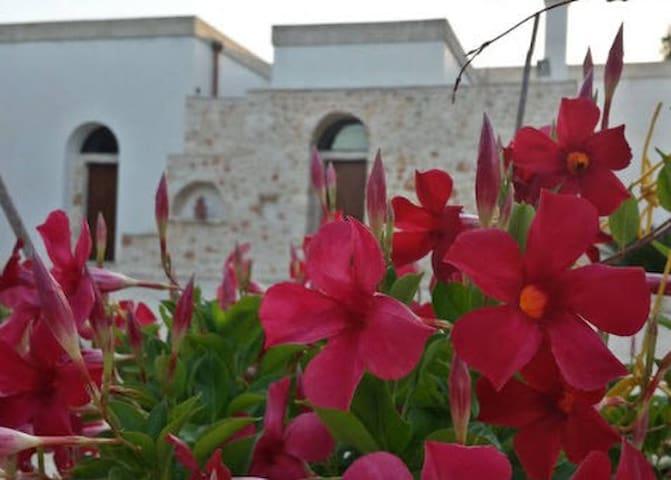 OLIVE GARDEN PUGLIA VACATION - San Vito dei Normanni - Casa