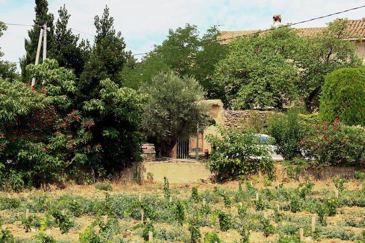 Aile de ferme provençale au coeur du vignoble - Châteauneuf-du-Pape - Haus