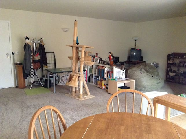 Clean Sunny Comfy Home Away from Home - Cheviot - Apartmen